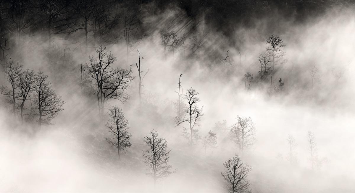 3 - Luz filtrada por los árboles | Juan José López Azurmendi
