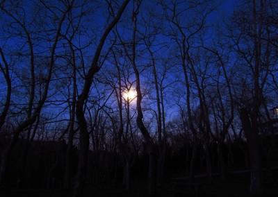 Finalista - A la luz de la luna | Mikel Muñoz Gomez