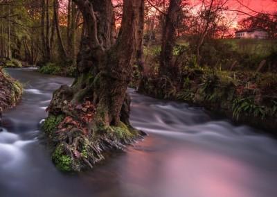Finalista - El árbol y el sol | Eladio Aires Pacheco