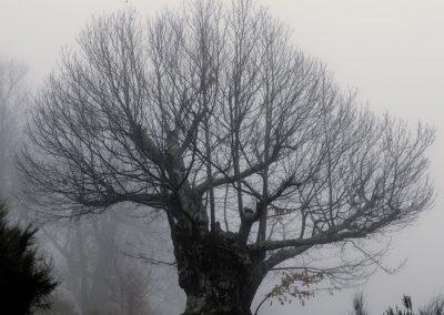 FINALISTA - Guardián del bosque _ Damián Gallego Vaquero