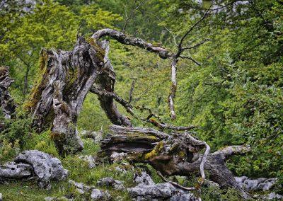 FINALISTA - árbol caído _ Enrique Gutiérrez Cárdenas
