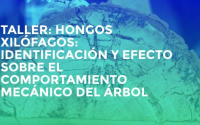 TALLER: HONGOS XILÓFAGOS. PIERRE AVERSENQ. Madrid 28-29-30 noviembre