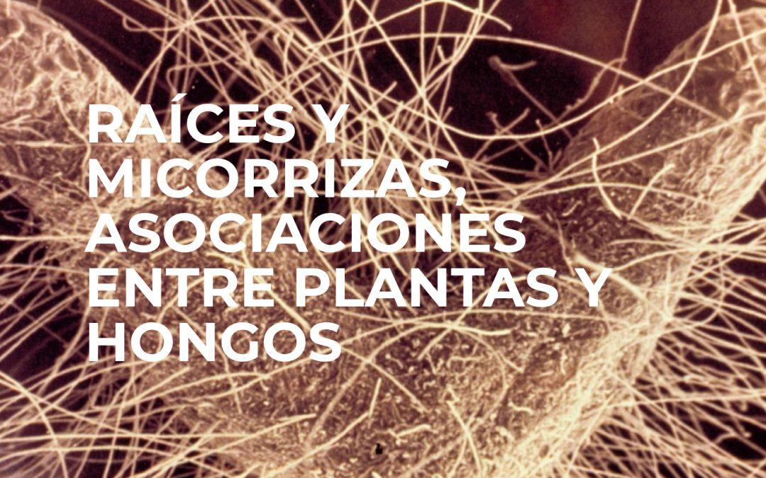 TALLER: RAÍCES Y MICORRIZAS, ASOCIACIONES ENTRE PLANTAS Y HONGOS. JEAN GARBAYE -PAMPLONA 15-16 NOVIEMBRE