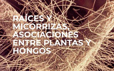 TALLER: RAÍCES Y MICORRIZAS, ASOCIACIONES ENTRE PLANTAS Y HONGOS. JEAN GARBAYE – DR. BAGO -PAMPLONA 15-16 NOVIEMBRE