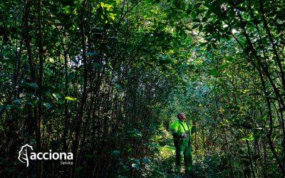 [Entrada Patrocinada] #ACCIONAService Más de 100 años cuidando del verde urbano