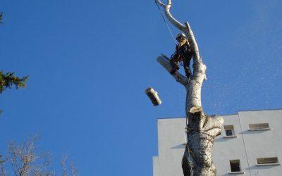 El seguro para trabajadores del árbol
