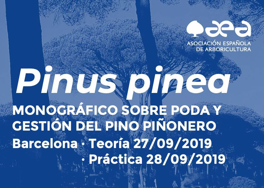 MONOGRÁFICO SOBRE PODA Y GESTIÓN DEL PINO PIÑONERO. BARCELONA 27-28/09/2019