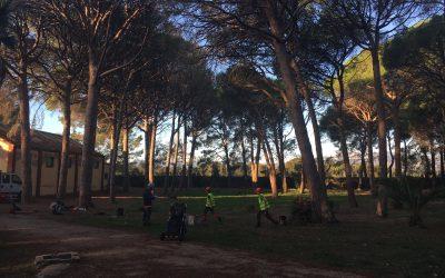 Examen European Tree Worker (ETW)