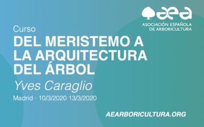 CURSO: DEL MERISTEMO A LA ARQUITECTURA DEL ÁRBOL