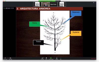 Primer seminario web de la Asociación Española de Arboricultura