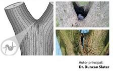 'Evaluación de Horquillas en Árboles' de Duncan Slater en la librería on line
