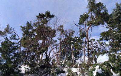 Efectos devastadores en el arbolado a causa del temporal Filomena